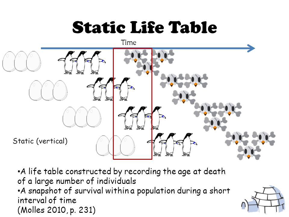 Data Collection for Life Table Age (x)NxNx BxBx 0160 2-480 5-752 8-1024