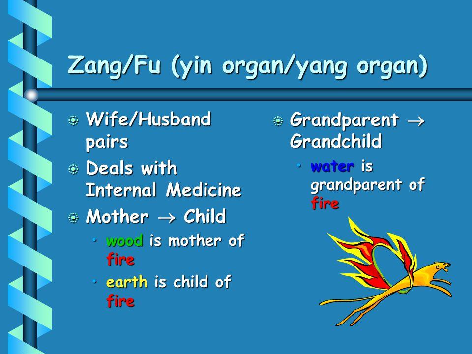 Zang/Fu (yin organ/yang organ) b Wife/Husband pairs b Deals with Internal Medicine b Mother  Child wood is mother of firewood is mother of fire earth