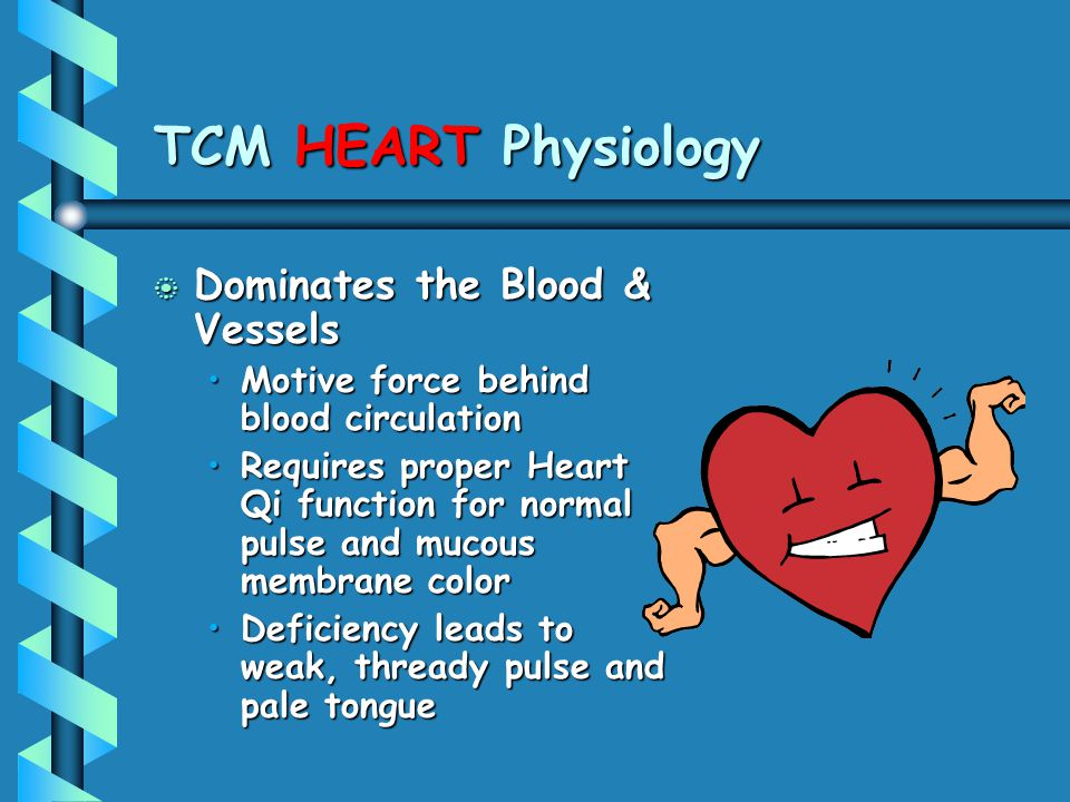TCM HEART Physiology b Dominates the Blood & Vessels Motive force behind blood circulationMotive force behind blood circulation Requires proper Heart