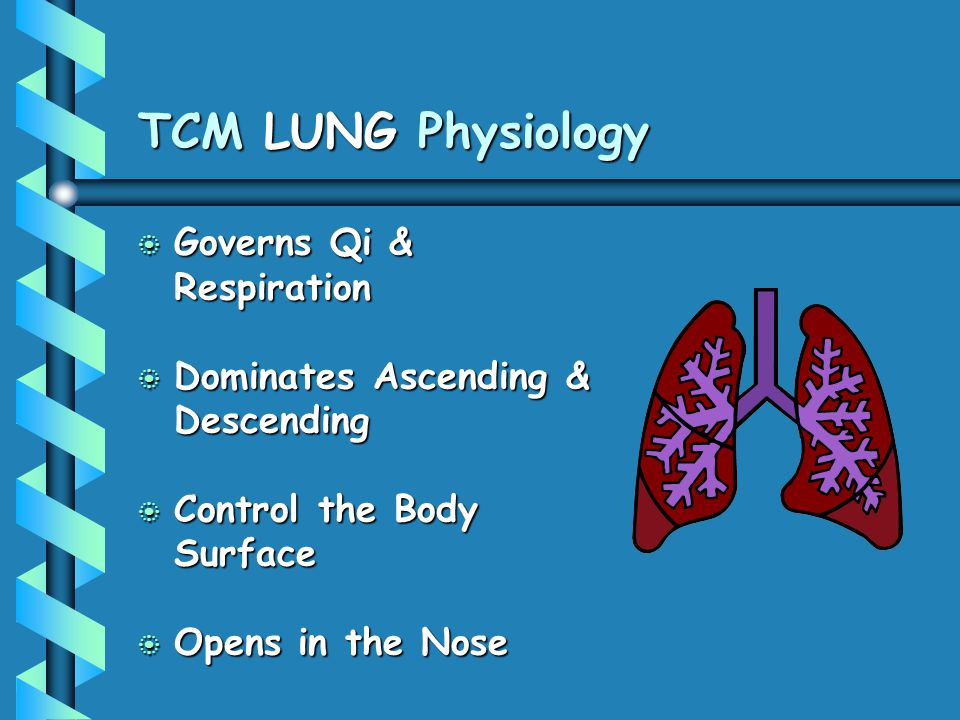 TCM LUNG Physiology b Governs Qi & Respiration b Dominates Ascending & Descending b Control the Body Surface b Opens in the Nose