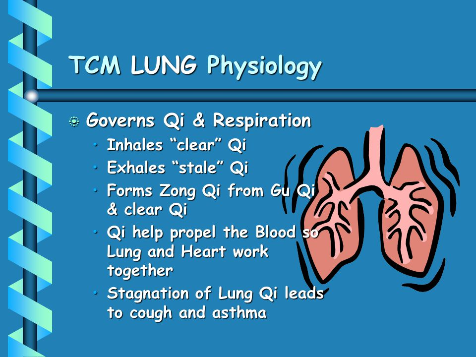 """TCM LUNG Physiology b Governs Qi & Respiration Inhales """"clear"""" QiInhales """"clear"""" Qi Exhales """"stale"""" QiExhales """"stale"""" Qi Forms Zong Qi from Gu Qi & cl"""