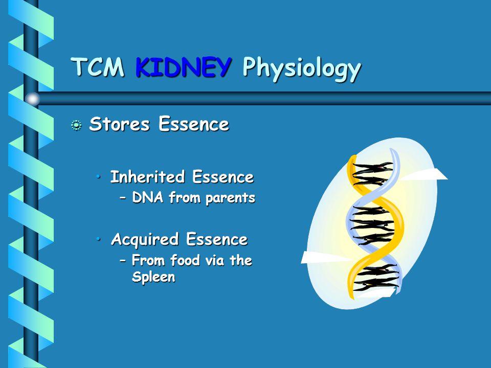 TCM KIDNEY Physiology b Stores Essence Inherited EssenceInherited Essence –DNA from parents Acquired EssenceAcquired Essence –From food via the Spleen