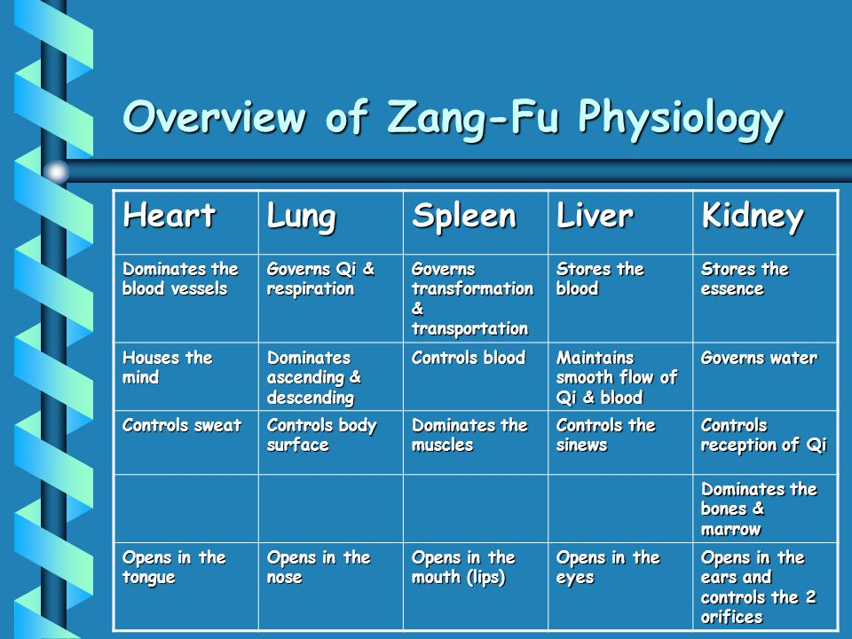 Overview of Zang-Fu Physiology HeartLungSpleenLiverKidney Dominates the blood vessels Governs Qi & respiration Governs transformation & transportation