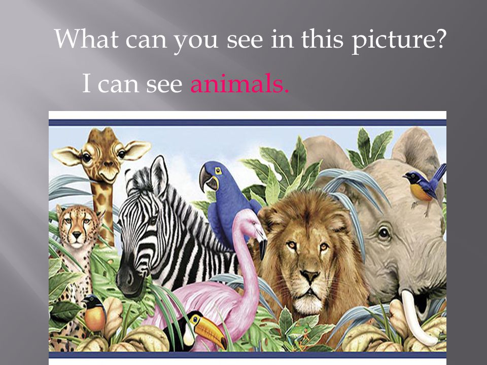 What can you see in this picture? I can see animals.