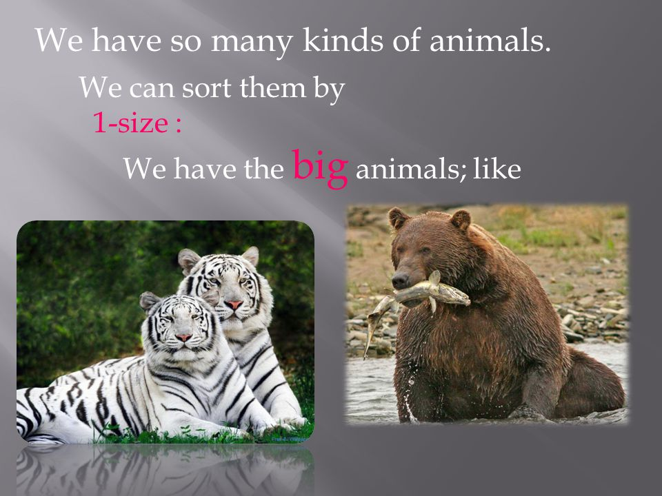 We have so many kinds of animals. We can sort them by 1-size : We have the big animals; like