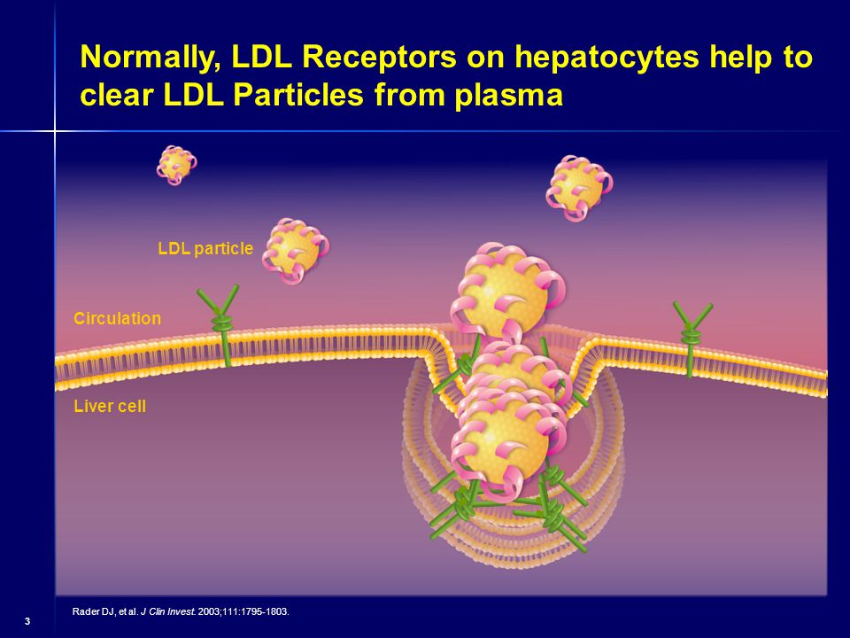 3 Normally, LDL Receptors on hepatocytes help to clear LDL Particles from plasma LDL particle Liver cell Circulation Rader DJ, et al.