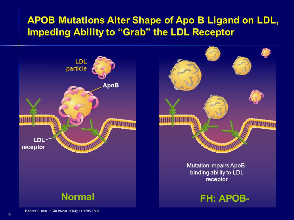 6 APOB Mutations Alter Shape of Apo B Ligand on LDL, Impeding Ability to Grab the LDL Receptor ApoB LDL particle LDL receptor Normal FH: APOB- Mutation impairs ApoB- binding ability to LDL receptor Rader DJ, et al.