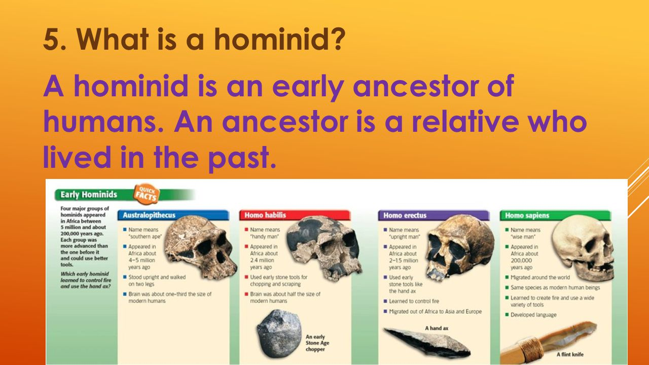 5. What is a hominid? A hominid is an early ancestor of humans. An ancestor is a relative who lived in the past.