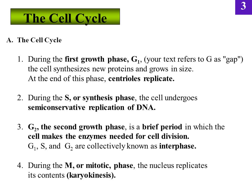 3 A.The Cell Cycle 1.