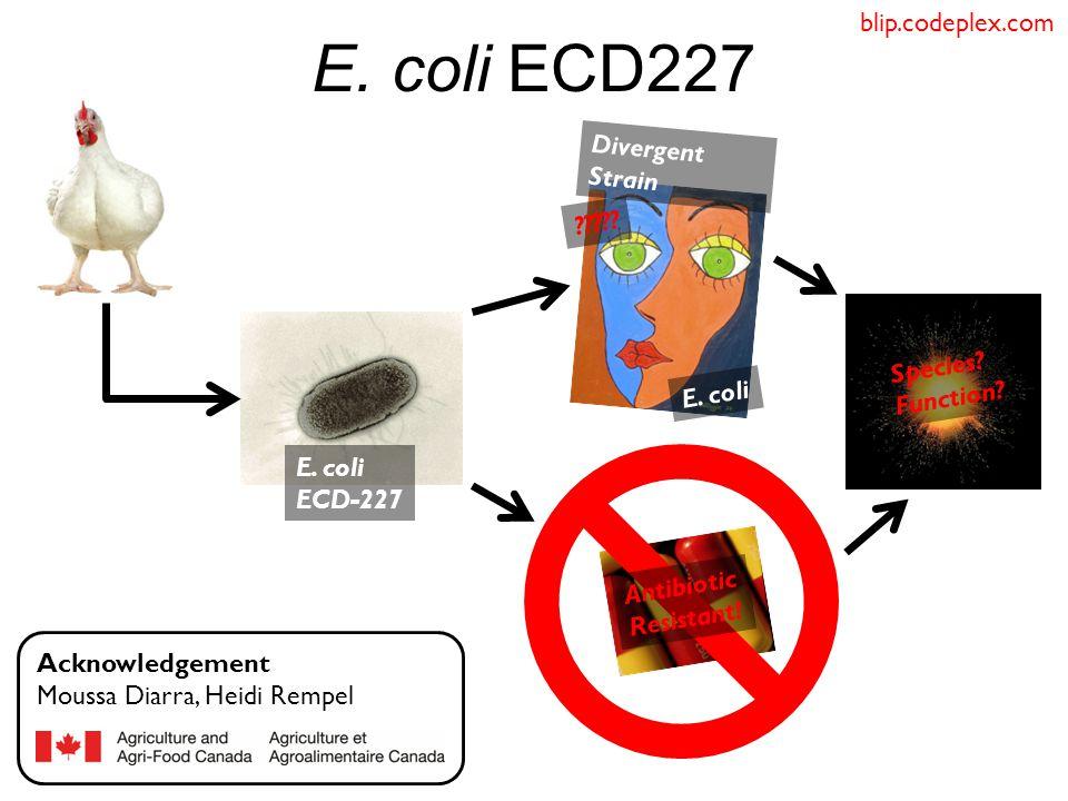 E.coli ECD227 E. coli ????. E. coli ECD-227 Acknowledgement Moussa Diarra, Heidi Rempel Species.
