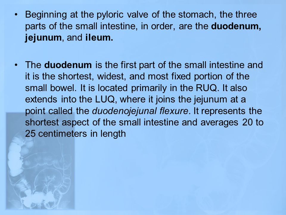 Beginning at the pyloric valve of the stomach, the three parts of the small intestine, in order, are the duodenum, jejunum, and ileum. The duodenum is