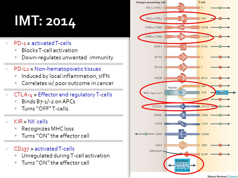  PD-1 = activated T-cells  Blocks T-cell activation  Down-regulates unwanted immunity  PD-L1 = Non-hematopoietic tissues  Induced by local inflammation,  IFN  Correlates w/ poor outcome in cancer  CTLA-4 = Effector and regulatory T-cells  Binds B7-1/-2 on APCs  Turns OFF T-cells  KIR = NK cells  Recognizes MHC loss  Turns ON the effector cell  CD137 = activated T-cells  Unregulated during T-cell activation  Turns ON the effector cell