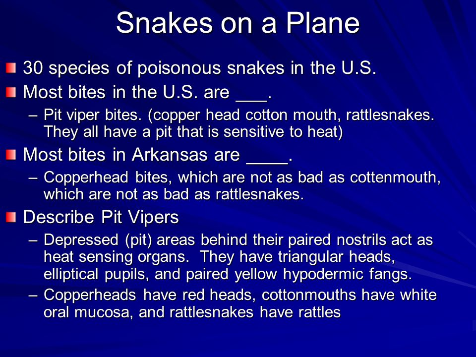 Snakes on a Plane 30 species of poisonous snakes in the U.S. Most bites in the U.S. are ___. –Pit viper bites. (copper head cotton mouth, rattlesnakes