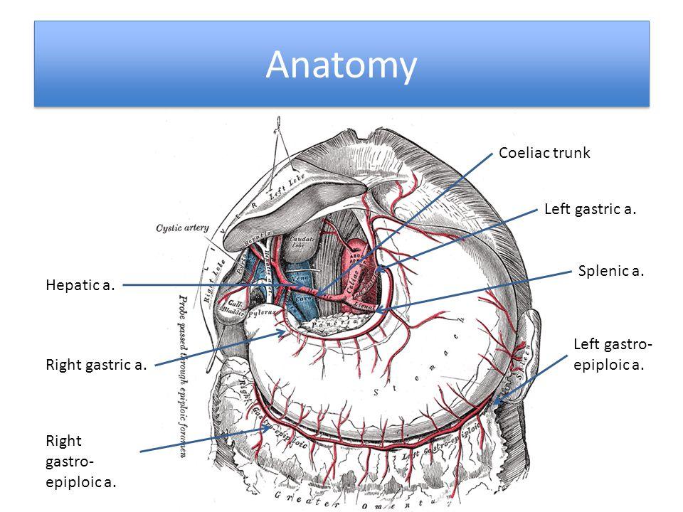 Anatomy Hepatic a. Left gastric a. Right gastric a. Left gastro- epiploic a. Right gastro- epiploic a. Splenic a. Coeliac trunk