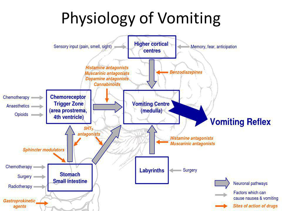 Physiology of Vomiting