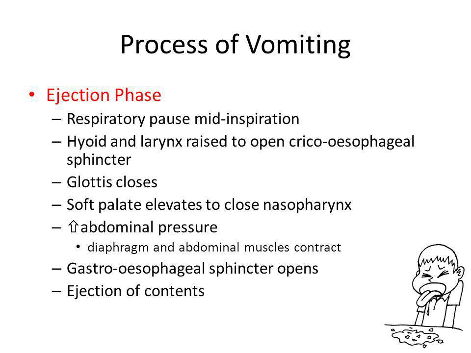 Process of Vomiting Ejection Phase – Respiratory pause mid-inspiration – Hyoid and larynx raised to open crico-oesophageal sphincter – Glottis closes – Soft palate elevates to close nasopharynx –  abdominal pressure diaphragm and abdominal muscles contract – Gastro-oesophageal sphincter opens – Ejection of contents