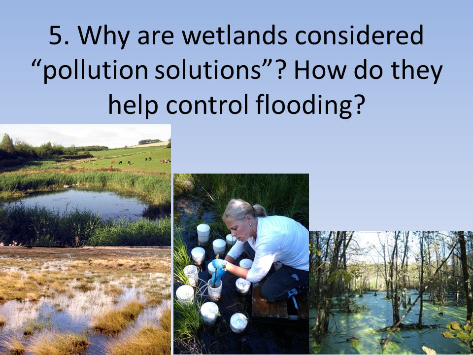 """5. Why are wetlands considered """"pollution solutions""""? How do they help control flooding?"""