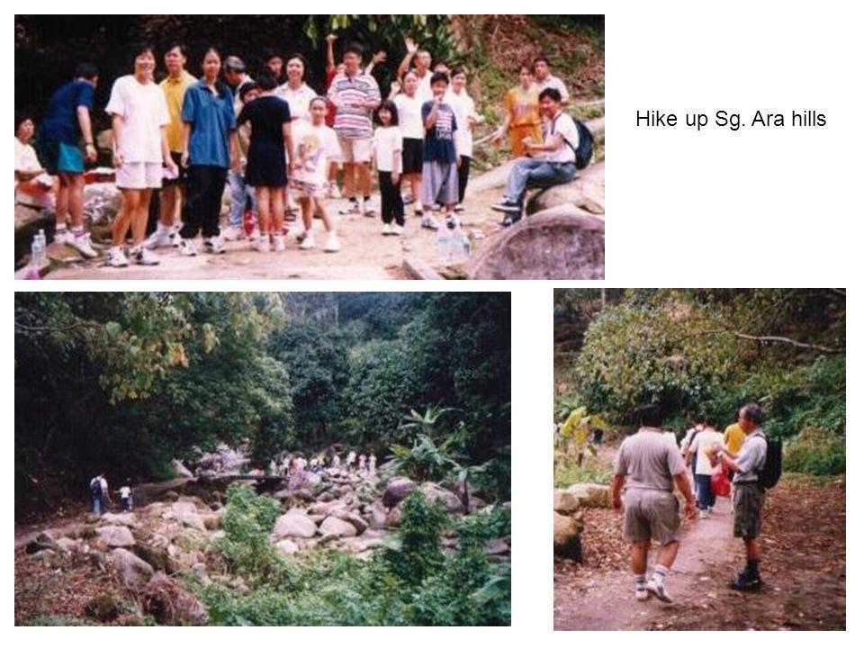 Hike up Sg. Ara hills