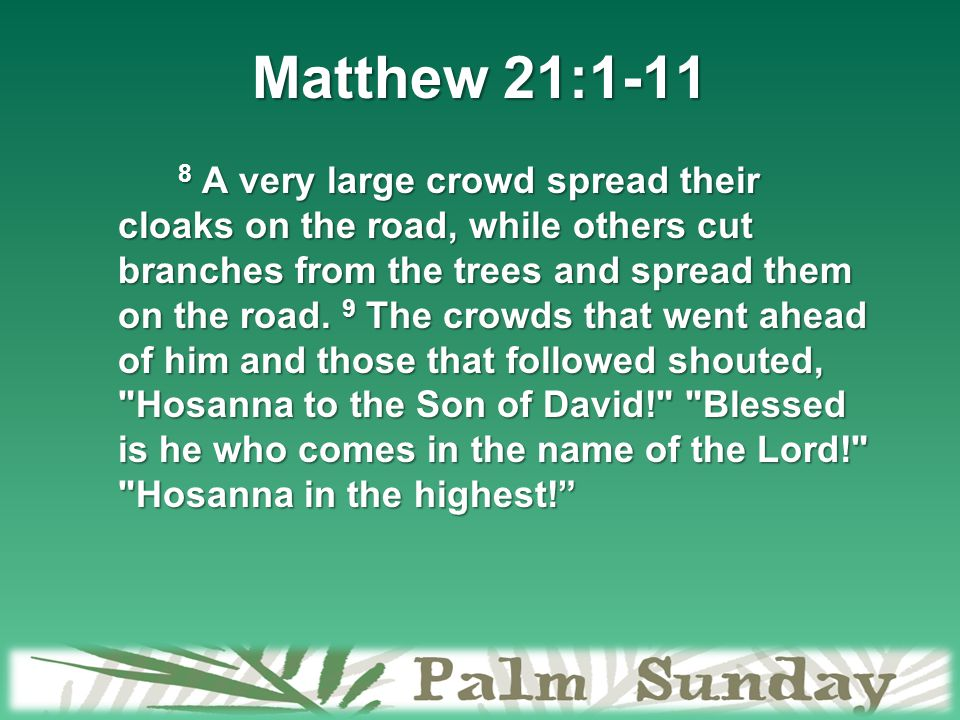 Matthew 21:1-11 8 A very large crowd spread their cloaks on the road, while others cut branches from the trees and spread them on the road.