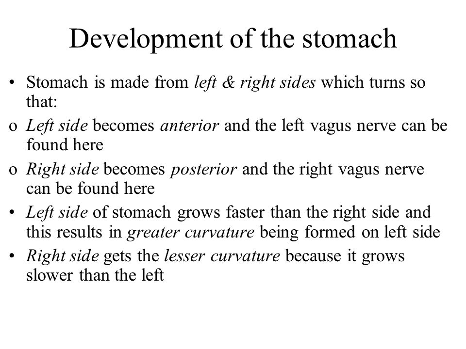 Development of the stomach Stomach is made from left & right sides which turns so that: oLeft side becomes anterior and the left vagus nerve can be found here oRight side becomes posterior and the right vagus nerve can be found here Left side of stomach grows faster than the right side and this results in greater curvature being formed on left side Right side gets the lesser curvature because it grows slower than the left