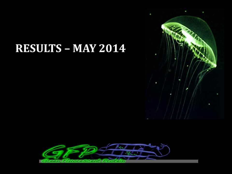 RESULTS – MAY 2014