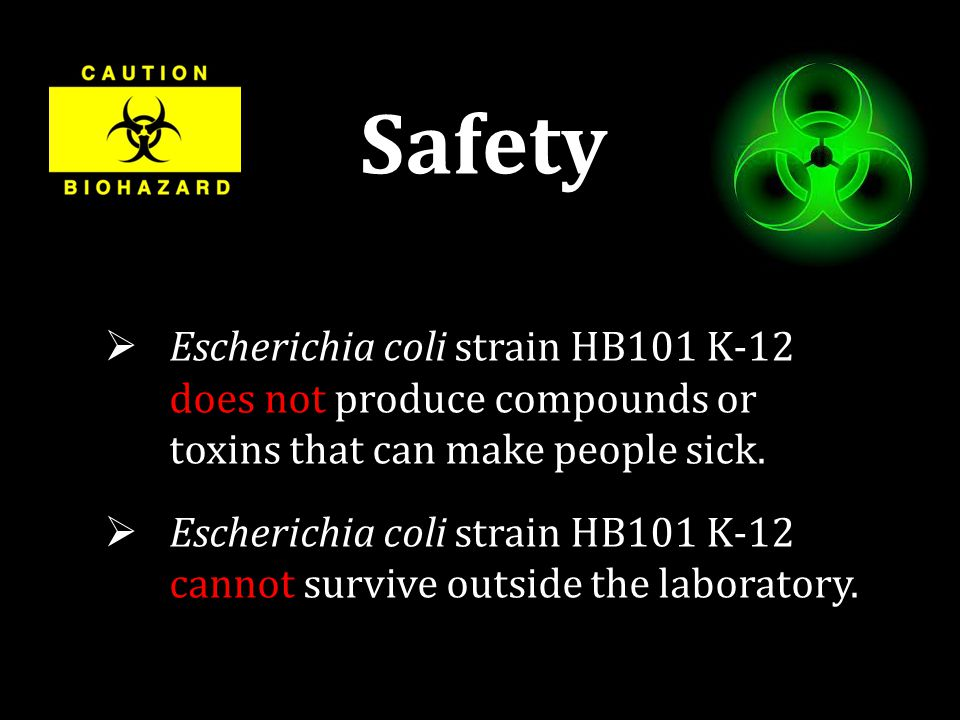 Safety  Escherichia coli strain HB101 K-12 does not produce compounds or toxins that can make people sick.