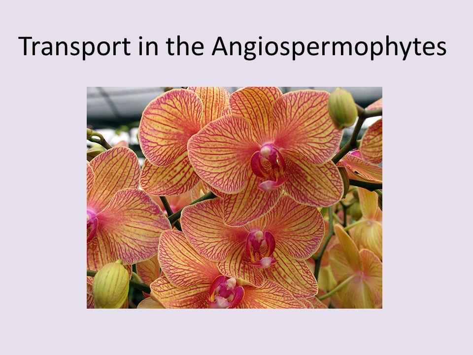 Transport in the Angiospermophytes
