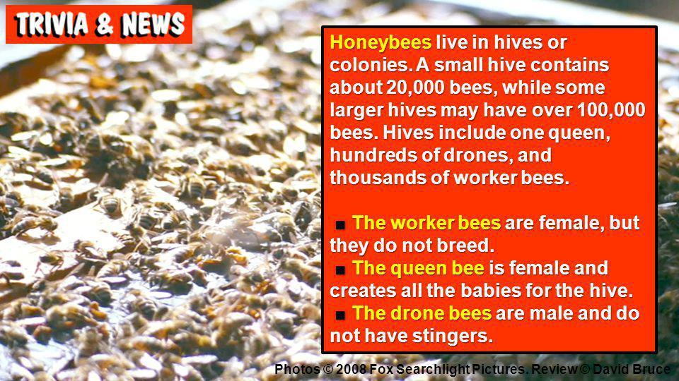 Honeybees live in hives or colonies. A small hive contains about 20,000 bees, while some larger hives may have over 100,000 bees. Hives include one qu