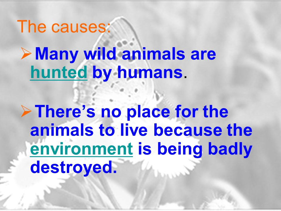 The causes:  Many wild animals are hunted by humans.