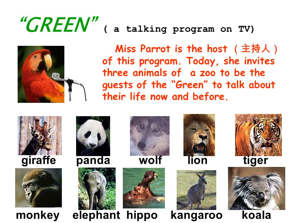 GREEN ( a talking program on TV) giraffe panda wolf lion tiger monkey elephant hippo kangaroo koala Miss Parrot is the host (主持人) of this program.