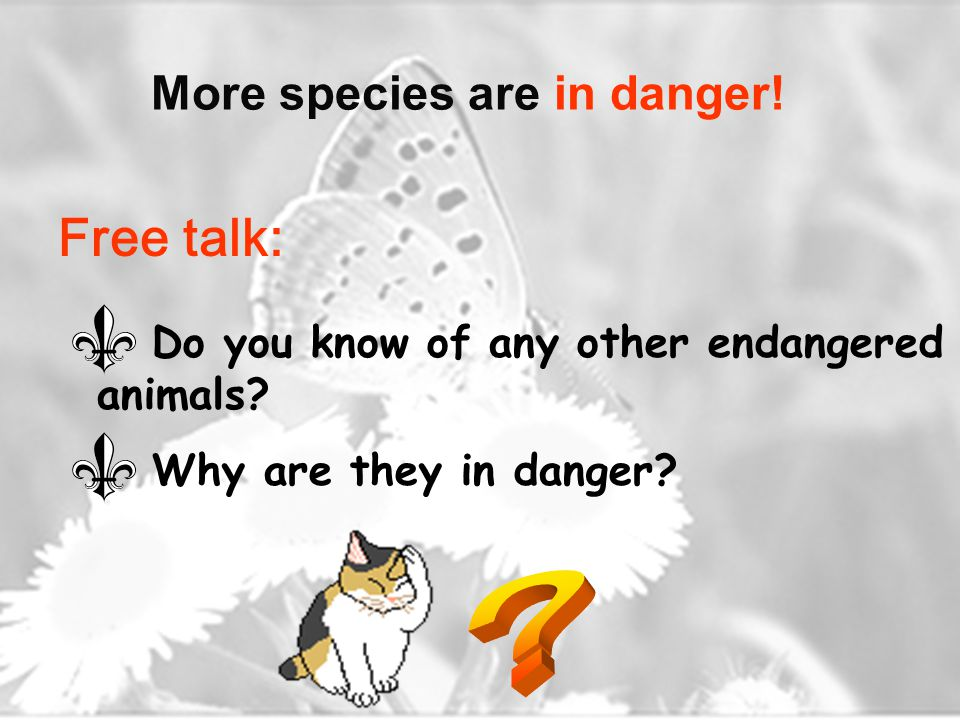 More species are in danger. Do you know of any other endangered animals.