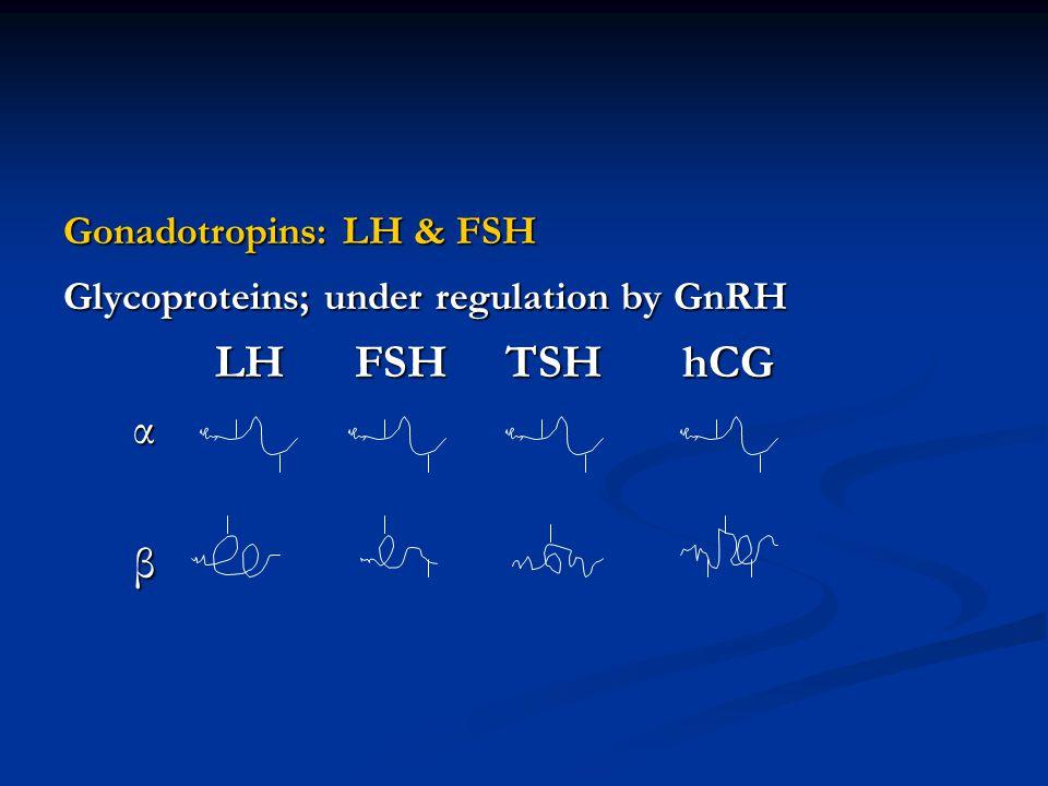 Gonadotropins: LH & FSH Glycoproteins; under regulation by GnRH LH FSH TSH hCG LH FSH TSH hCG α β