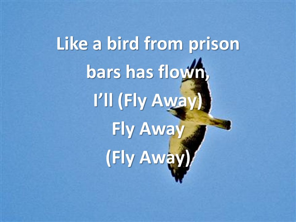 Like a bird from prison bars has flown, I'll (Fly Away) Fly Away (Fly Away)