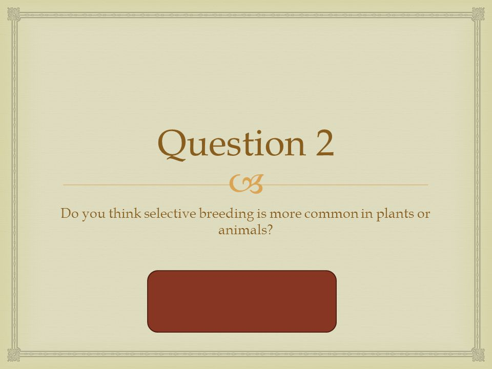  Question 2 Do you think selective breeding is more common in plants or animals.