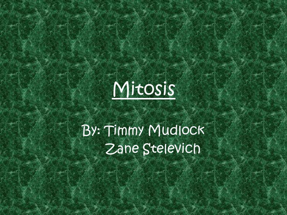 Mitosis By: Timmy Mudlock Zane Stelevich