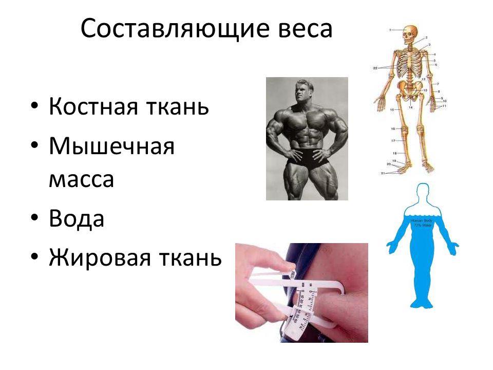 Составляющие веса Костная ткань Мышечная масса Вода Жировая ткань