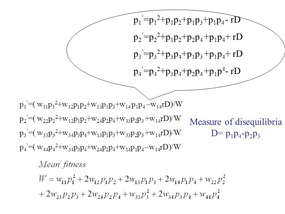 p 1 ' =( w 11 p 1 2 +w 12 p 1 p 2 +w 13 p 1 p 3 +w 14 p 1 p 4 –w 14 rD)/W p 2 ' =( w 22 p 2 2 +w 12 p 1 p 2 +w 24 p 2 p 4 +w 33 p 2 p 3 +w 14 rD)/W p 3 ' =( w 33 p 3 2 +w 34 p 3 p 4 +w 13 p 1 p 3 +w 33 p 2 p 3 +w 14 rD)/W p 4 ' =( w 44 p 4 2 +w 34 p 3 p 4 +w 24 p 2 p 4 +w 14 p 1 p 4 –w 14 rD)/W Measure of disequilibria D= p 1 p 4 -p 2 p 3 p 1 ' =p 1 2 +p 1 p 2 +p 1 p 3 +p 1 p 4 - rD p 2 ' =p 2 2 +p 1 p 2 +p 2 p 4 +p 1 p 4 + rD p 3 ' =p 3 2 +p 3 p 4 +p 1 p 3 +p 1 p 4 + rD p 4 ' =p 4 2 +p 3 p 4 +p 2 p 4 +p 1 p 4 - rD