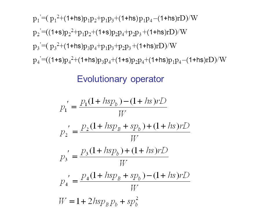 p 1 ' =( p 1 2 + (1+hs) p 1 p 2 +p 1 p 3 + (1+hs) p 1 p 4 – (1+hs) rD)/W p 2 ' =( (1+s) p 2 2 +p 1 p 2 + (1+s) p 2 p 4 +p 2 p 3 + (1+hs) rD)/W p 3 ' =( p 3 2 + (1+hs) p 3 p 4 +p 1 p 3 +p 2 p 3 + (1+hs) rD)/W p 4 ' =( (1+s) p 4 2 + (1+hs) p 3 p 4 + (1+s) p 2 p 4 + (1+hs) p 1 p 4 – (1+hs) rD)/W Evolutionary operator