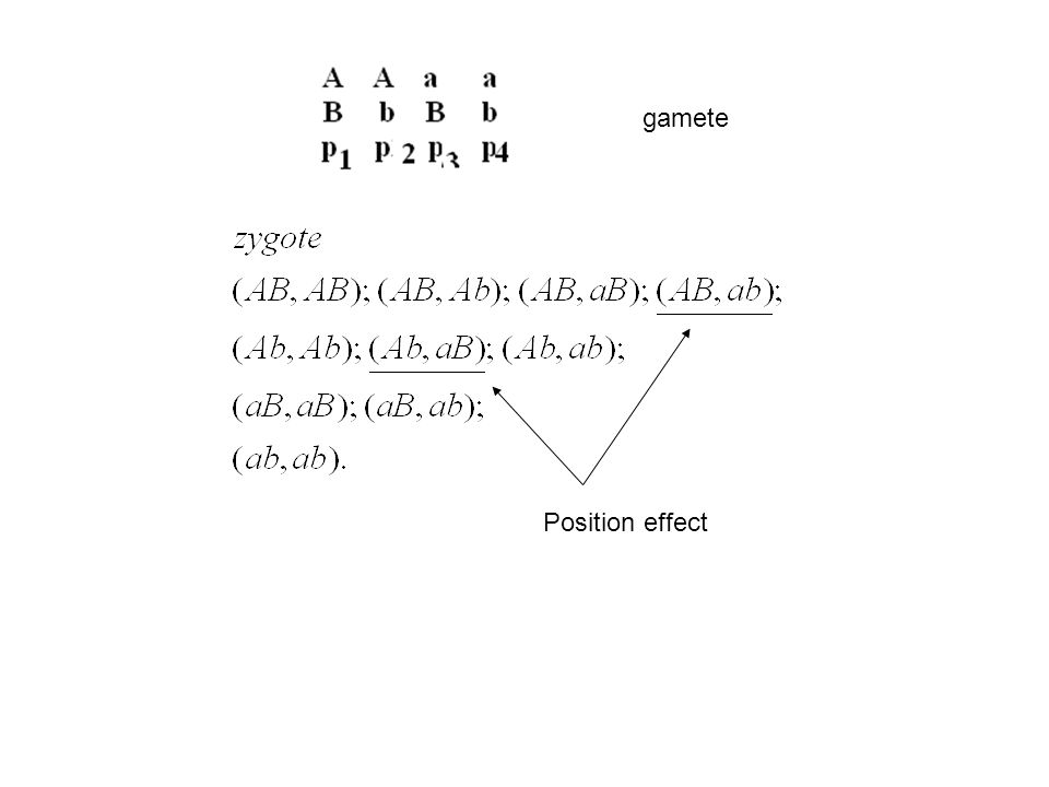 gamete Position effect