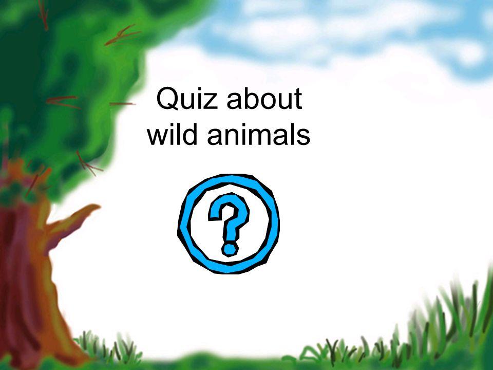 Quiz about wild animals