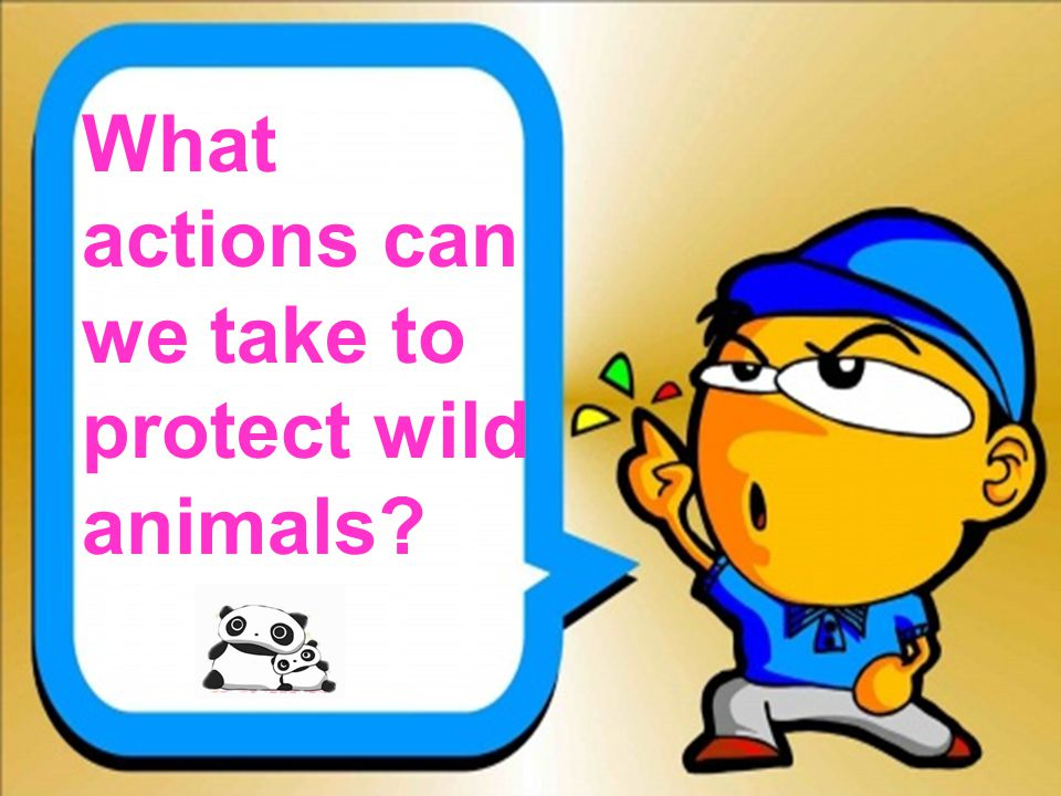 What actions can we take to protect wild animals?