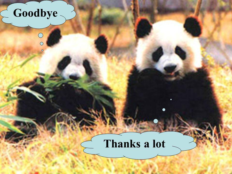Goodbye Thanks a lot