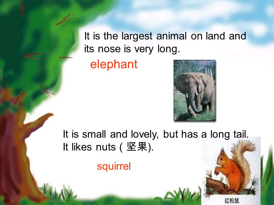 It is the largest animal on land and its nose is very long. elephant It is small and lovely, but has a long tail. It likes nuts (坚果 ). squirrel