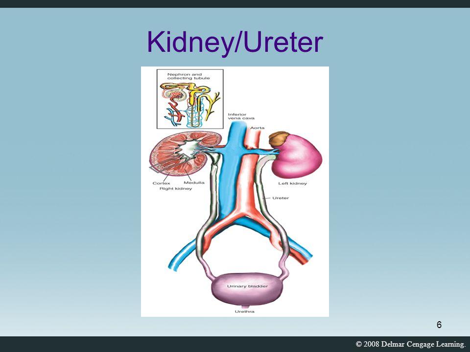 © 2008 Delmar Cengage Learning. 6 Kidney/Ureter
