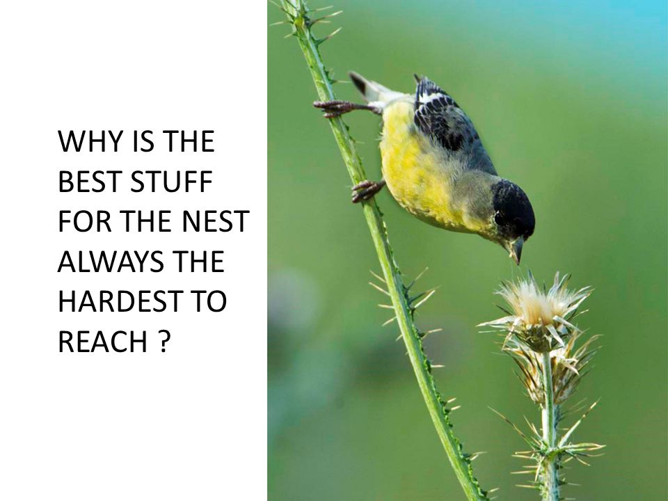 WHY IS THE BEST STUFF FOR THE NEST ALWAYS THE HARDEST TO REACH ?