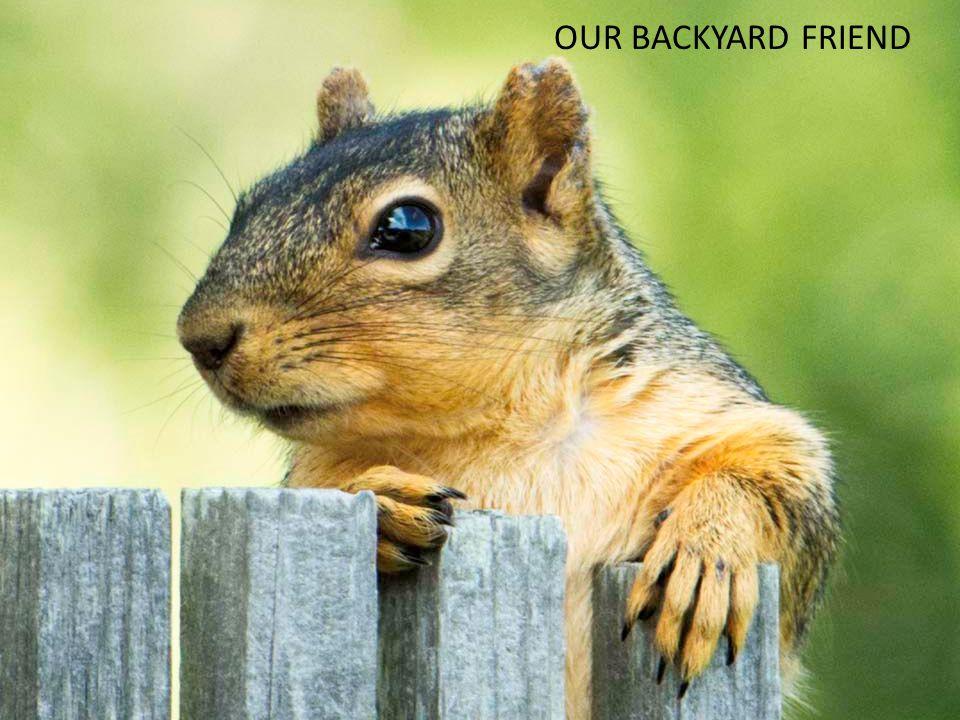 OUR BACKYARD FRIEND