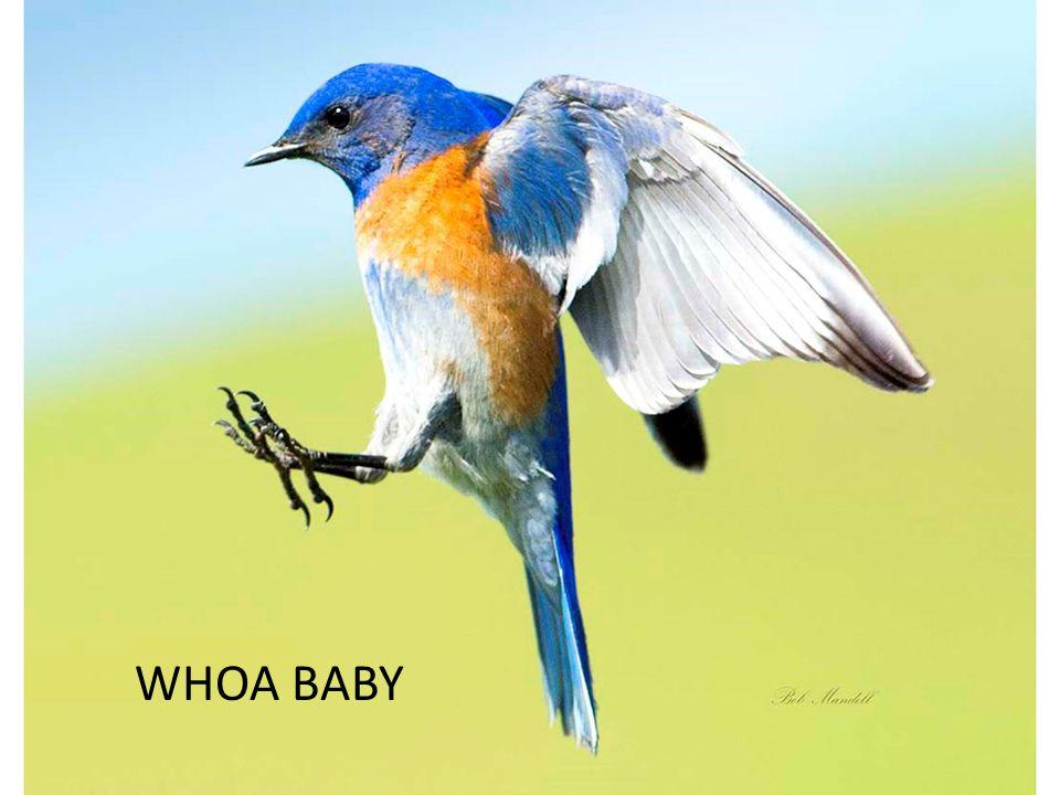 WHOA BABY