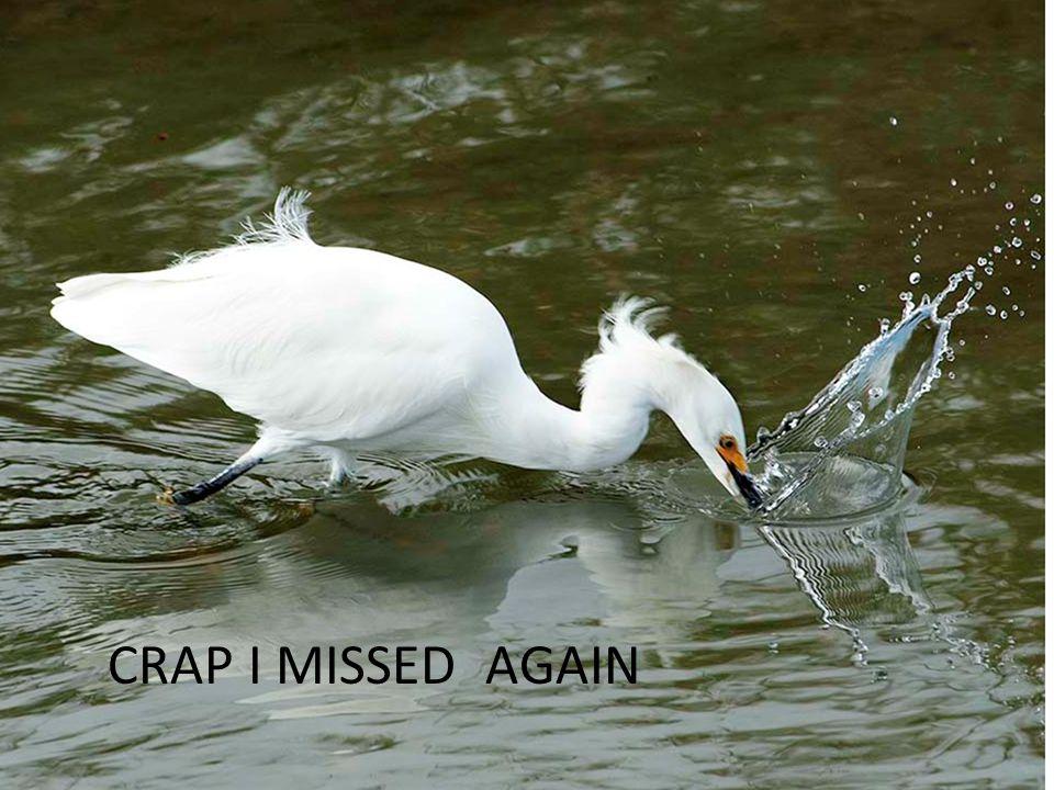 CRAP I MISSED AGAIN