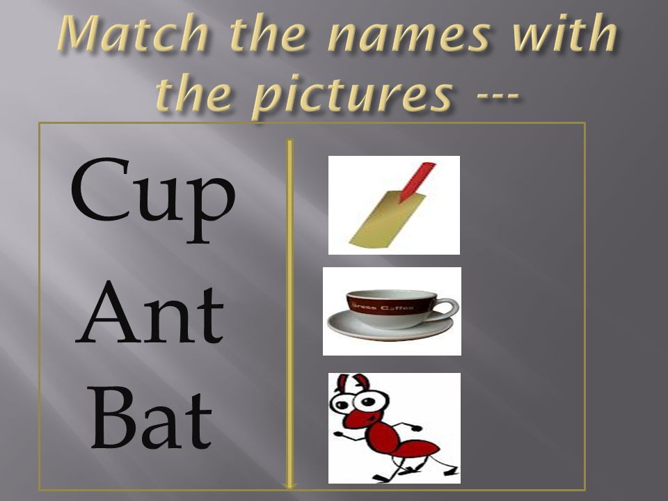 Cup Ant Bat