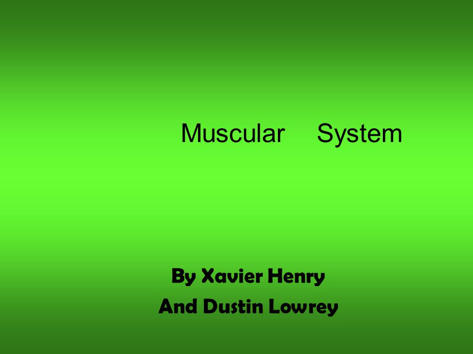 Muscular System By Xavier Henry And Dustin Lowrey